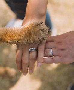 dank dem Hundehaltercoaching hast du eine harmonische Mensch-Hund Beziehung