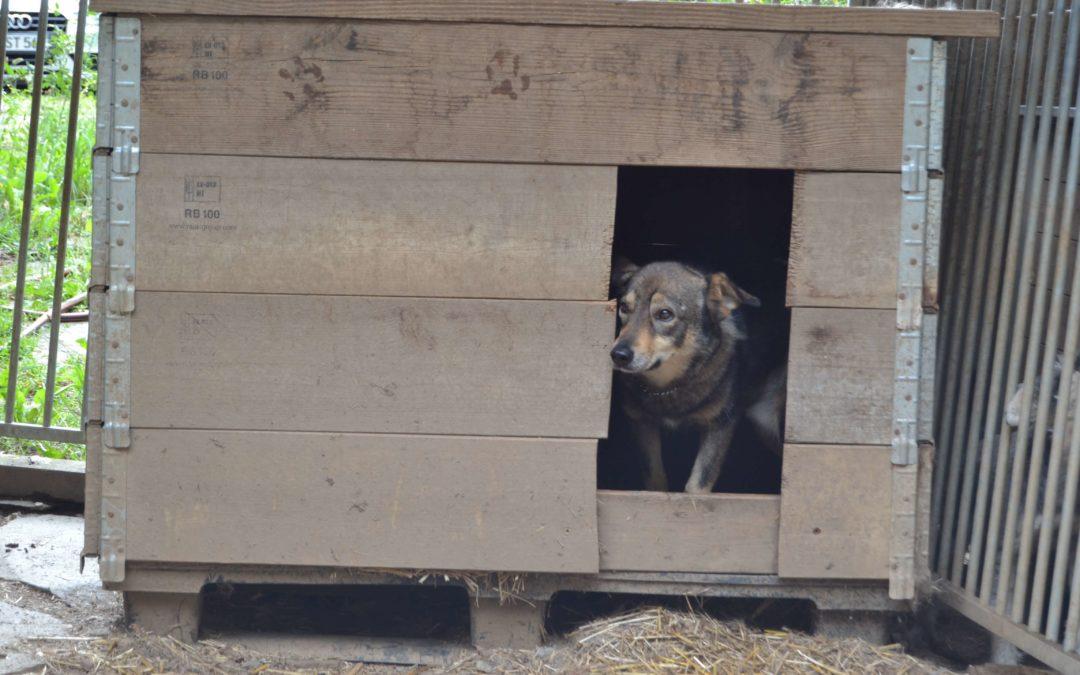 Angsthund Bandito versteckt sich zitternd in seiner Hütte