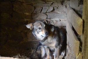 Angsthund Bandito wurde in der Prägungszeit auf der Tötungsstation von Menschen so eingeschüchtert, dass er auch heute noch vor Fremden angst hat.