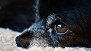 Unsere Hunde sind unser Spiegelbild. Das Gesetz der Anziehung funktioniert auch da, ängstliche Menschen ziehen ängstliche Hunde an.