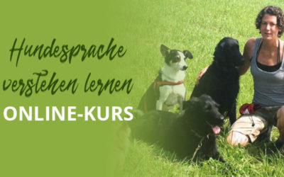 Hundesprache verstehen lernen – Online-Kurs