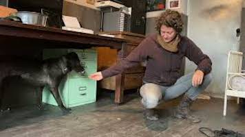 Training mit scheuem Wolfhund